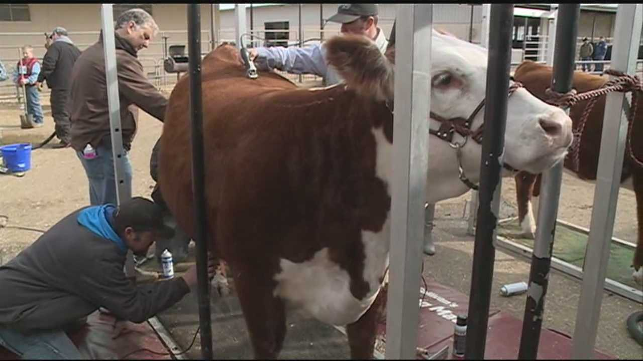 Crowds are heading to the Dixie National Rodeo as it gets into full swing this weekend.
