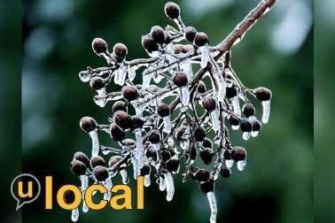 Upload your winter weather photos to u local.