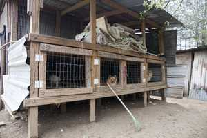 The ASPCA assists law enforcement in the removal, transport, sheltering and medical treatment of more than 130 dogs from an alleged puppy mill in Choctaw County, Alabama.