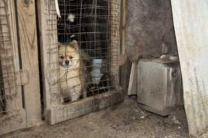 The dogs were being housed in ramshackle kennels.