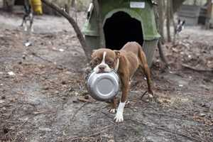 The ASPCA has established a temporary shelter where the dogs will receive medical care.