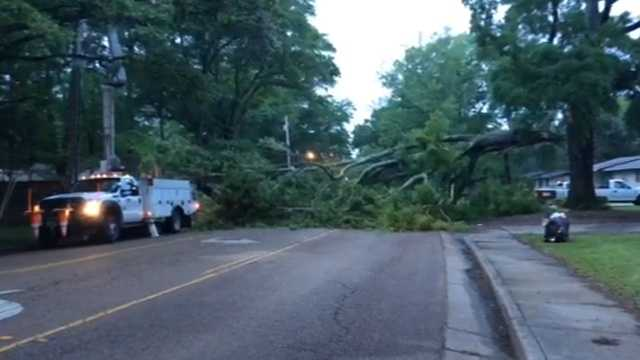 A huge part of a tree fell onto Savanna Street in Jackson Wednesday morning.