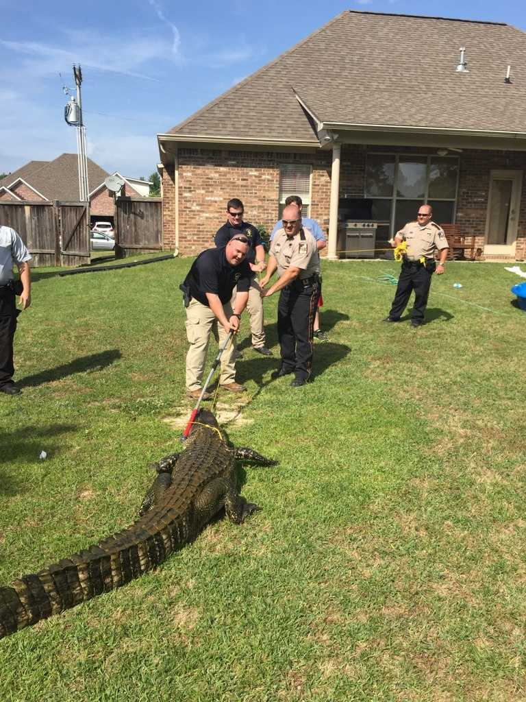 Rankin County sheriff's deputies were called in for backup.
