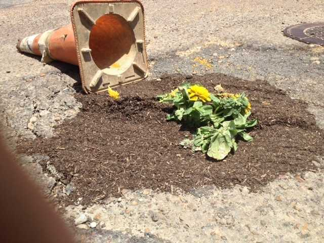 Jackson's potholes have been filling up with flowers.