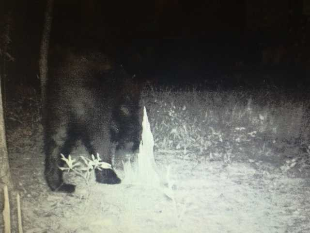 The images were recorded by a trail camera.