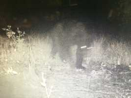 State wildlife officials say it's unusual to see a black bear in this area of the state.
