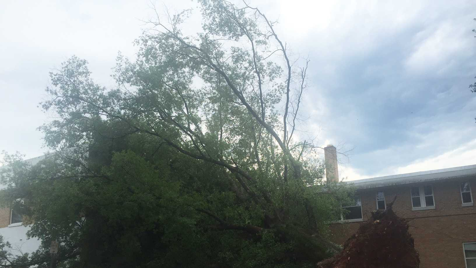 Crews were working to clear a tree that took down a power line in Carthage.