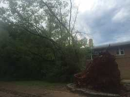 The tree was down at Ellis and Franklin in Carthage.