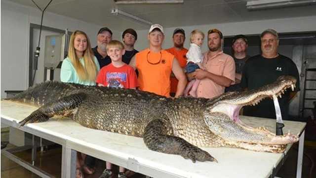 Eagle lake record alligator
