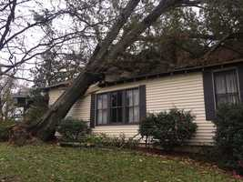 A man and woman were inside the house with their dog when the tree fell.