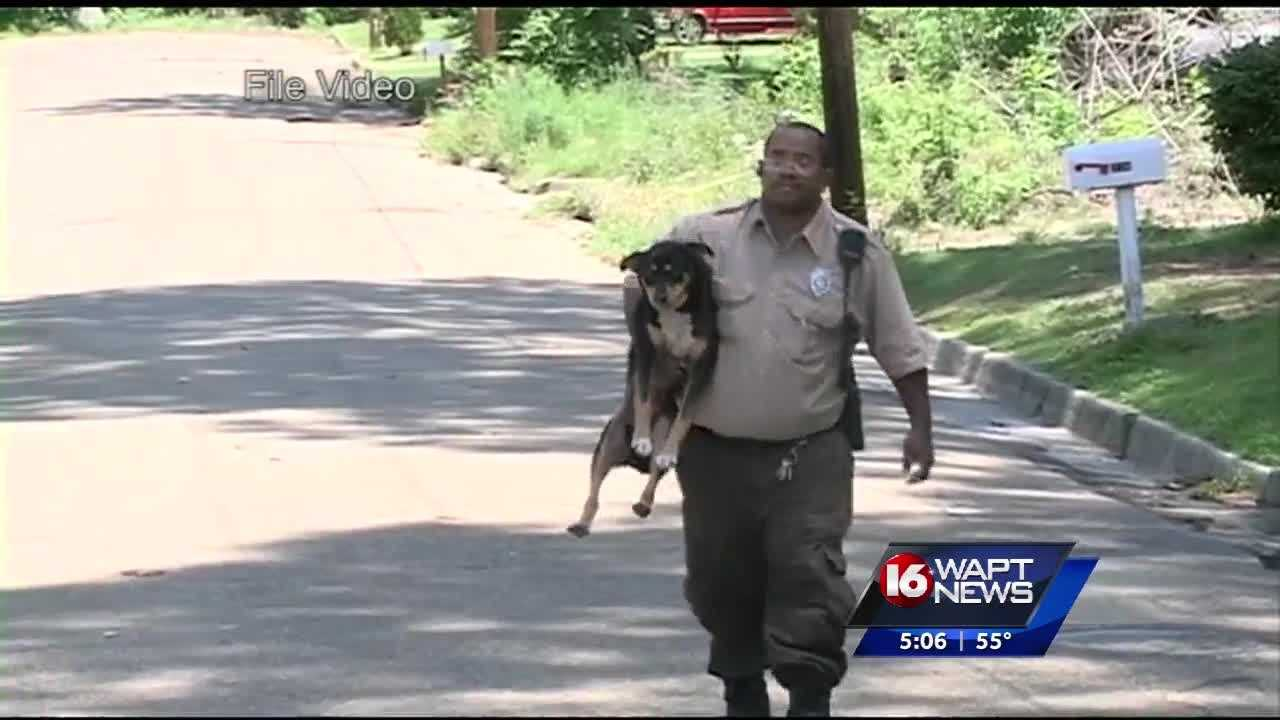 The zoo says ferrel dogs already killed several animals.