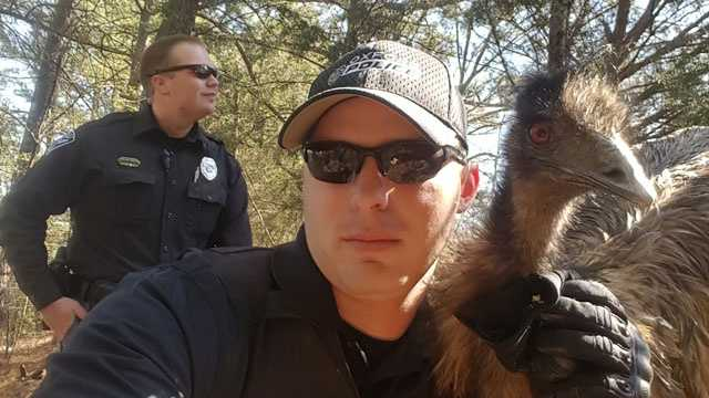 Oxford Police Officer Cody Pruitt poses for a selfie with a wandering emu.
