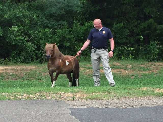 A pony got loose Tuesday and ended up in a Madison County neighborhood.