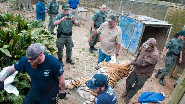 Images: Tigers, Other Animals Seized From Collins Zoo