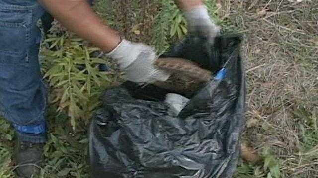 Dozens of volunteers armed with gloves and trash bags improve their community. .