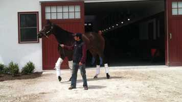 Correas said promising 3-year-old filly Millionreasonswhy would likely start in the $100,00 Miss Preakness Stakes on May 18.