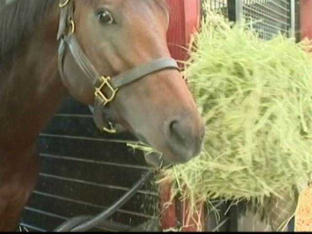 WBAL-TV 11 News Today visits Sagamore Farm ahead of the Preakness. | WBAL-TV\Ava Marie