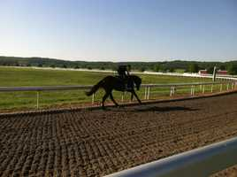 """At Sagamore Farm in Glyndon, Baltimore County, 3-year-old colt """"Tiger Walk"""" does his daily workout consisting of two laps galloping around the 3/4-mile track."""