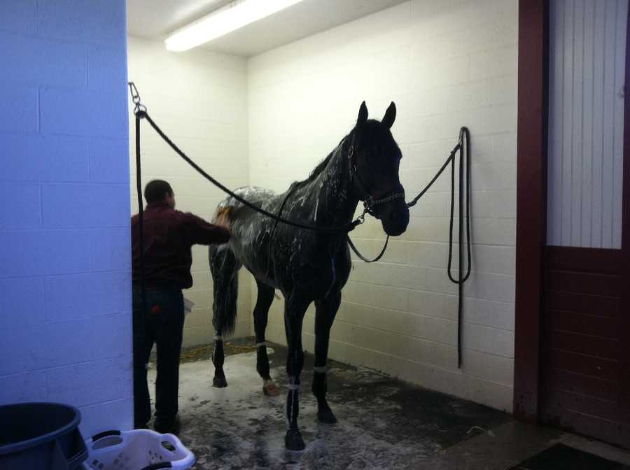 After the workout, he was walked around for a cool down, then given a nice relaxing bubble bath!
