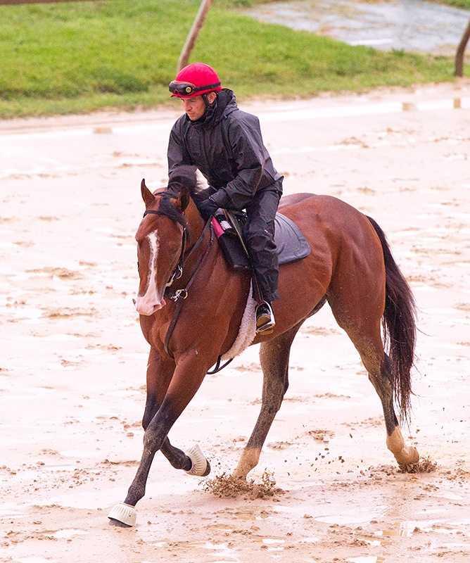 Zetterholm, seen in this photo taken Tuesday, is chosen to take the No. 4 post. |Jim McCue\Maryland Jockey Club
