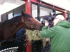 Definitely not camera shy horse.