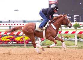 I'll Have Another gets a taste of the track at Pimlico on Monday before the Preakness. |Jim McCue\Maryland Jockey Club