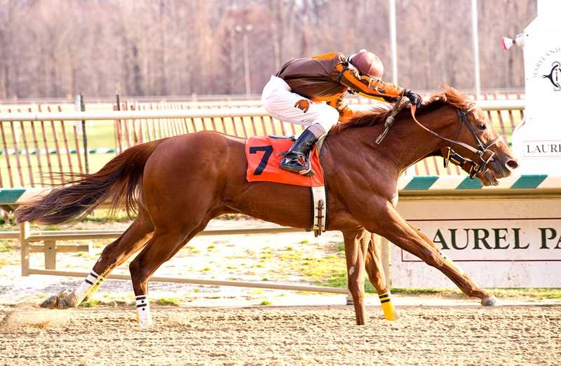 Plum |Jim McCue\Maryland Jockey Club