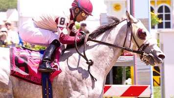 Il Villano breaks on top when betting favorite Innocent Man went to his knees at the start, then surrendered the lead to the betting favorite, only to take it back for good at the top of the stretch on his way to victory in the $100,000 Chick Lang Stakes Saturday at Pimlico Race Course.