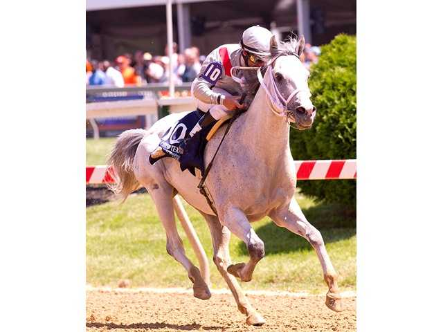 Shiek Joann Bin Hamad K. H. Al-Thani's T M Fred Texas continues his domination of North American Arabian-bred horses, romping to victory in the $75,000 President of UAE CUP (G1) Saturday at Pimlico Race Course.