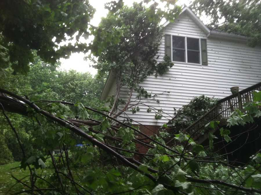 11 News reporter Nadia Ramdass says this tree went into a home in the 1900 block of Fawn Way in Finksburg.