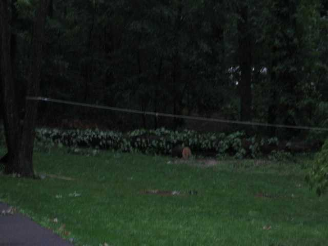 Damage in New Windsor, Carroll County.