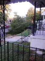 Tree down on Whistler Avenue in Morrell Park, Baltimore