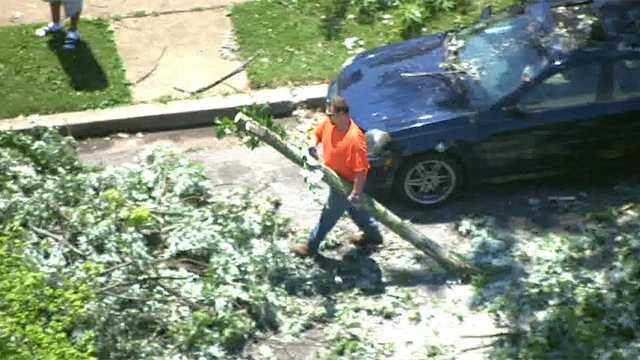 tree-damage-10.jpg