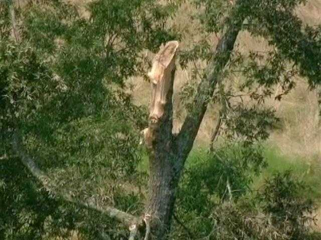 Witnesses told police that the aircraft's wing appeared to have struck a large tree before crashing to the ground.