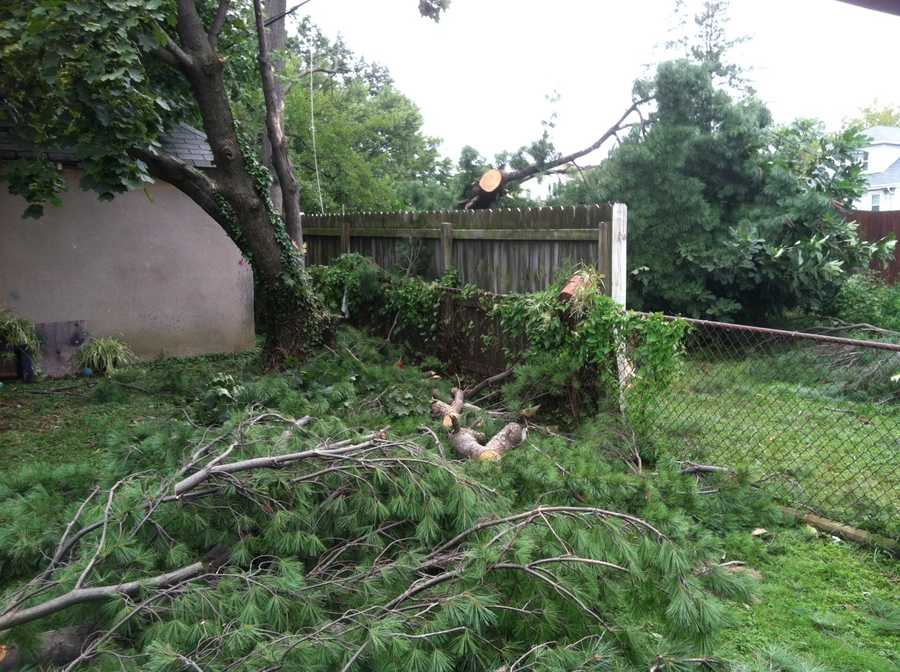 Downed trees were reported in the Parkville area.