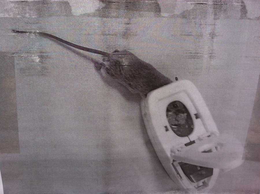Another person sent a photo of a rat that was somehow wedged into a computer mouse.