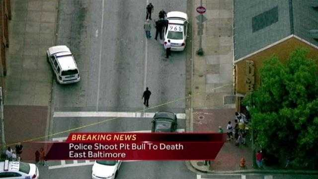 Pit Bull Shooting
