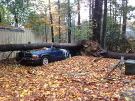 A tree falls on a truck, crushing it, in Anne Arundel County.