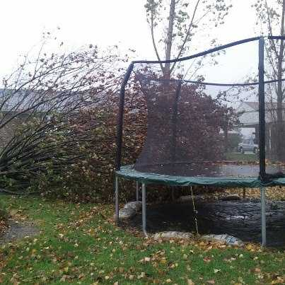 A tree fell on a trampoline in Bel Air.