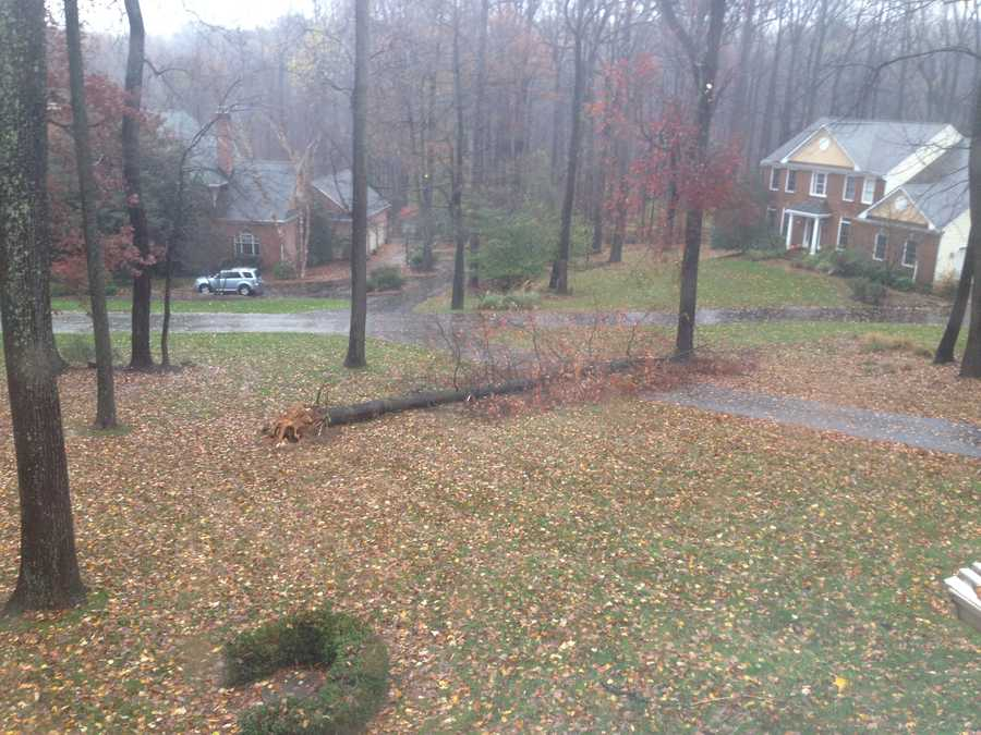 Tree down in Hunt Valley