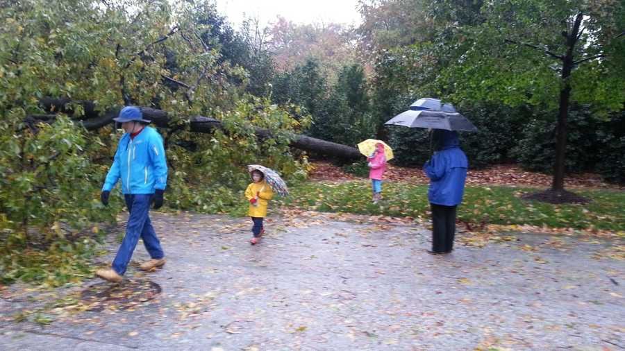 A 66 foot tall tree fell in Guilford.