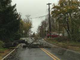 A downed tree in Cecil County rests on a power line.