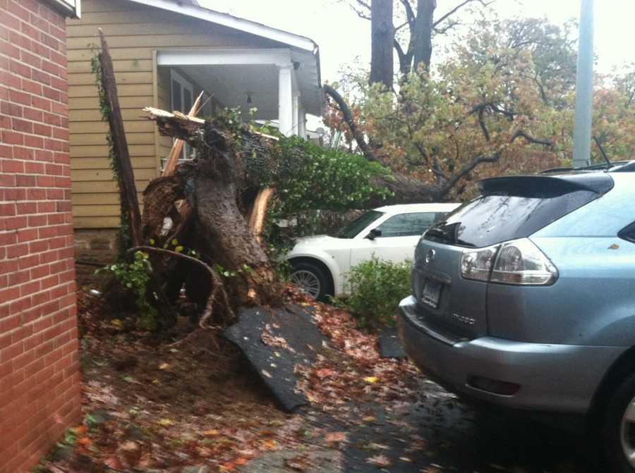 Lisa Hines said a tree on her property on Norwood Road fell on two houses and struck three cars.