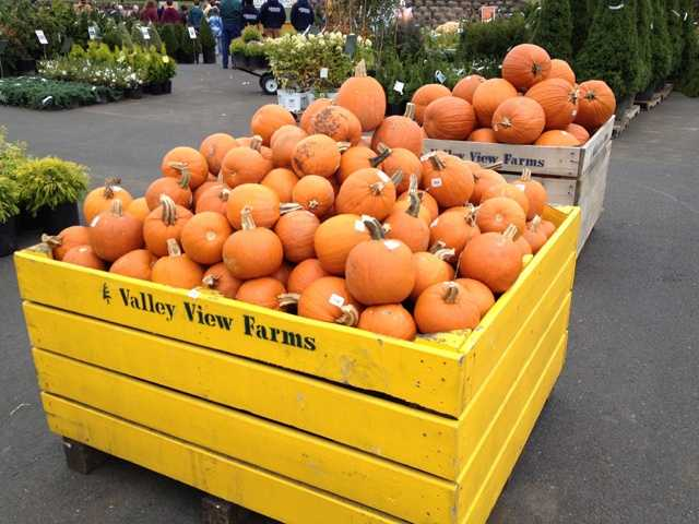 The pumpkins are our and we're feeling festive!