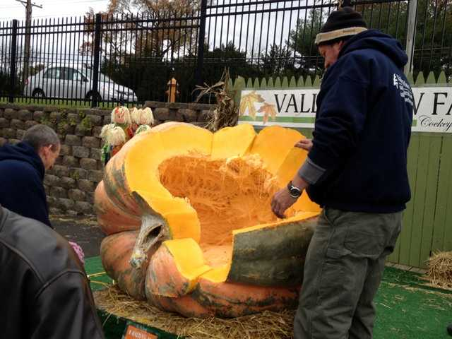 How's that for the inside of a pumpkin! Anything like your Halloween pumpkin?