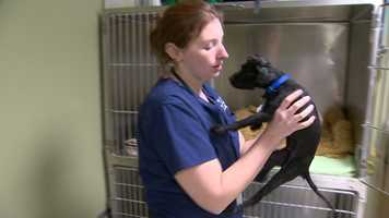 People can also donate online at www.mdspca.org by clicking on theHelp Mopsy link.