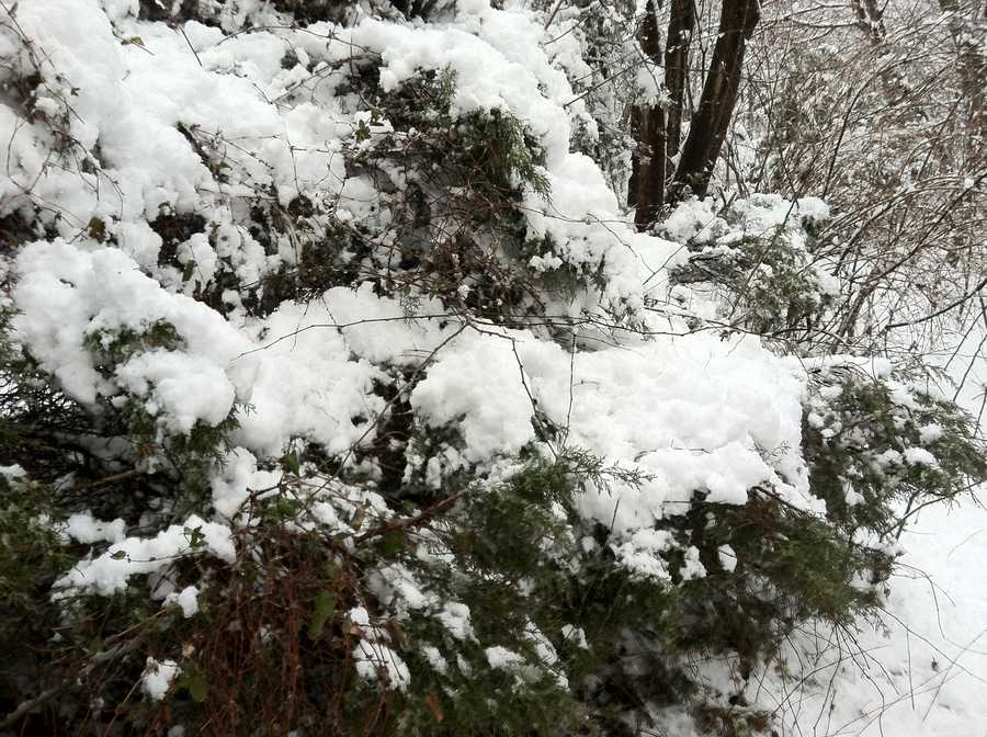 Heavy snow in Middletown, Frederick County