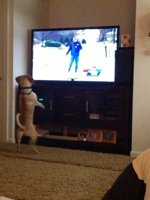 Tank the dog was even excited to watch Charlie the dog play in Rob's liveshot!