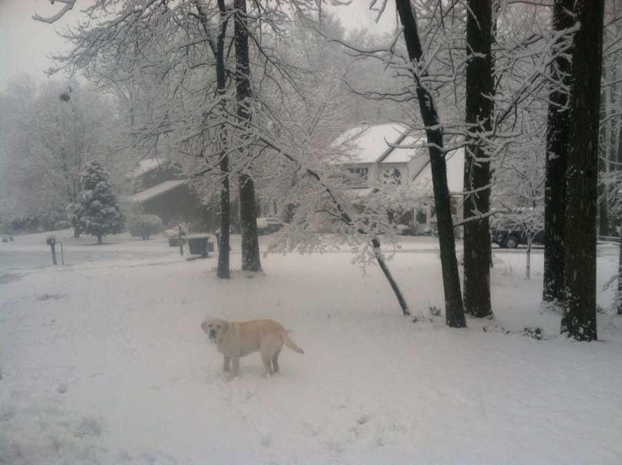 Charlie, WBAL-TV's favorite snowtime Labrador, makes an appearance in Eldersburg.