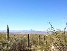 5. Arizona-Sonora Desert Museum -- Tucson, Ariz.Dedicated to the conservation of the Sonoran Desert, travelers will see more than 1,200 species of plants in the botanical garden at this Tucson museum. With nearly two miles of winding paths, guests are invited to meander their way through the 21-acre arid biome where they will encounter beauty at every turn. Open-year round, tickets are $14.50 for adults and $5 for children ages 4-12&#x3B; children 3 and under get in free.